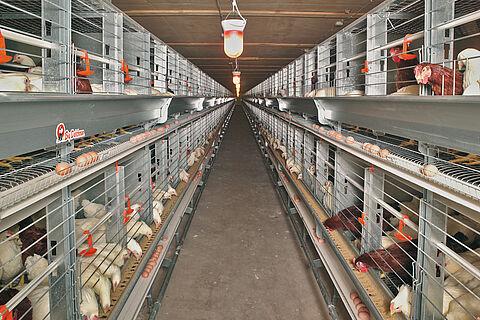 Eurovent-Parents breeder poultry cage